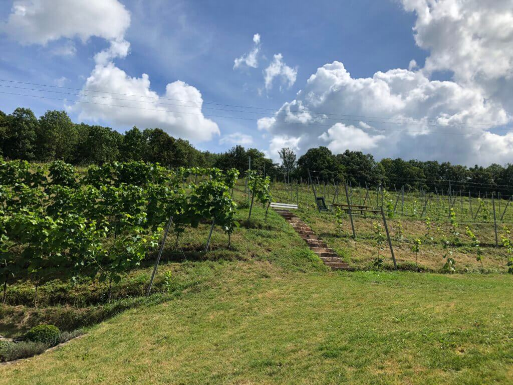 Weinhänge Heckenmühle und Weinlese 2020